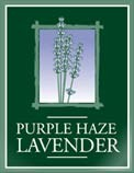 Purple Haze Lavender