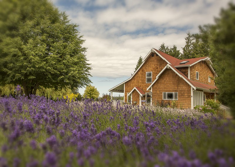 Lavender Vacation Rental
