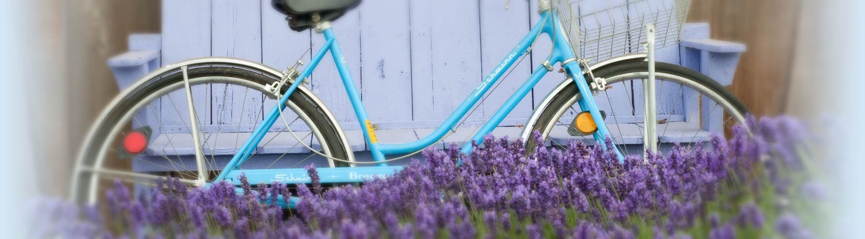 bicycle in lavender