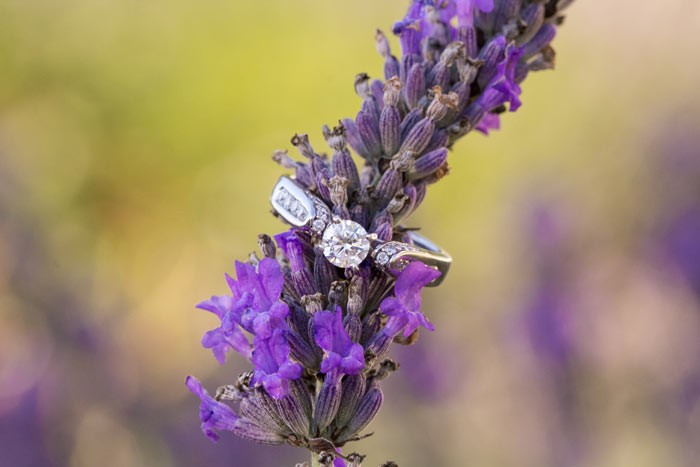 Ring on Lavender