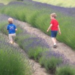 children in lavender