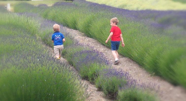 children in lavender