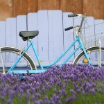bike in lavender