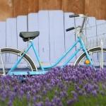 bike in lavender