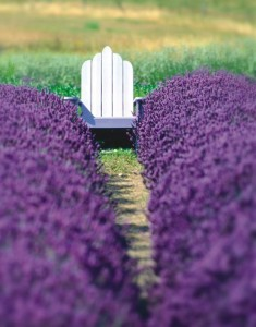 Chair in Lavender