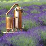 Lavender Still