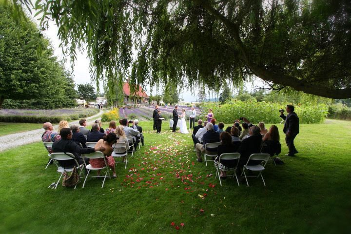 Wedding at Purple Haze Lavender