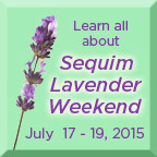 lavender weekend button