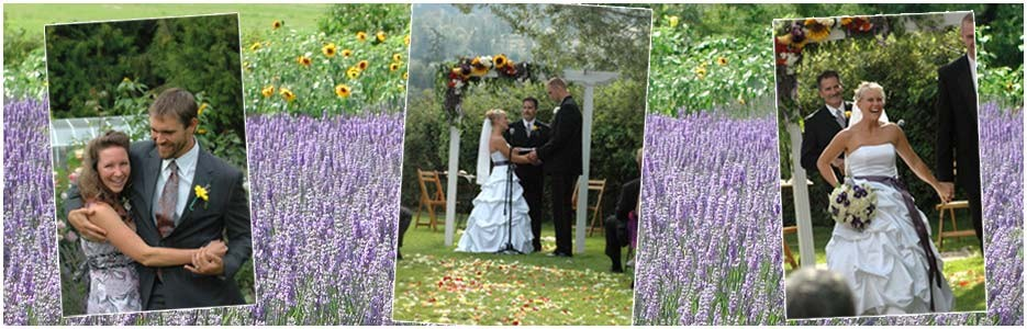 Weddings at Purple Haze