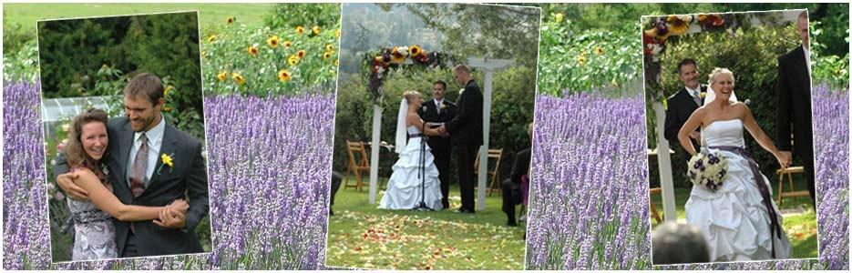 Weddings at Purple Haze