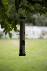 photo of bird feeder