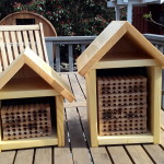 photo of mason bee houses